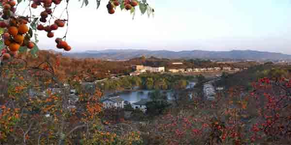 천삼협동농장